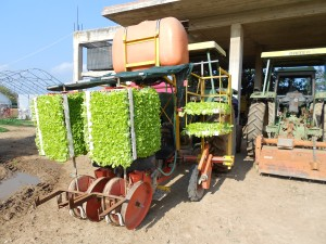 The tractor all suited up with trays and trays of lettuce seedlings.