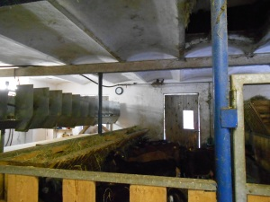 The barn for the big goats and the milking area.