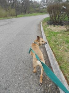 We just love walking!