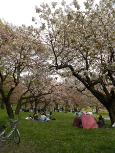 The last of the cherry blossoms and the picnics that go along with them!