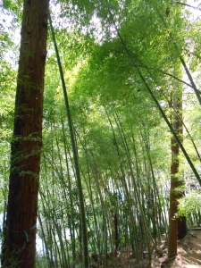 Bamboo forests are the best.