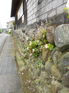 In Japan flowers even grow out of the cracks in rock walls!