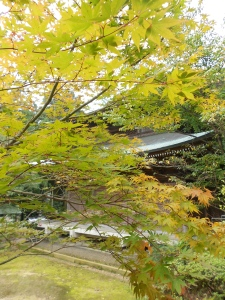 The first signs of fall at temple 65 Sankakuji.