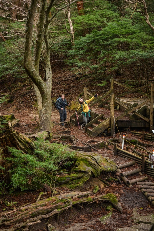 Day Two Jomon Sugi Hike (11 of 32)