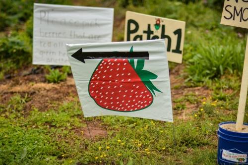Blog Strawberries!!! (Photos by Kelley Van Dilla) (1 of 24)
